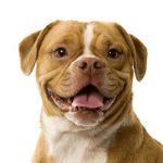 Photo of a mixed-breed dog named Ginger, mascot of Ginger's Treats Dog Treats